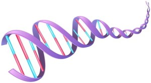 DNA CLC bio